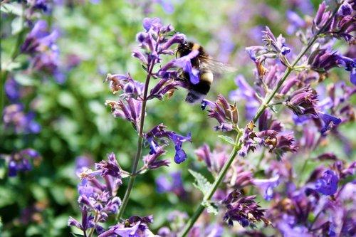 flowers  abeja  flor