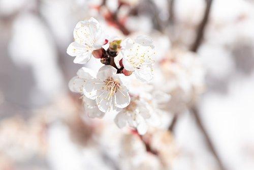 flowers  white  bloom