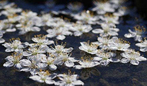flowers  white  water