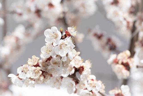 flowers  white  aesthetic
