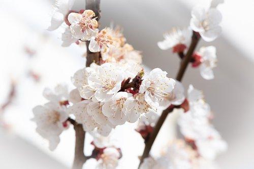 flowers  aesthetic  white
