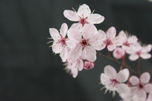 flowers  spring  branch