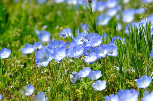 flowers  grasses  green