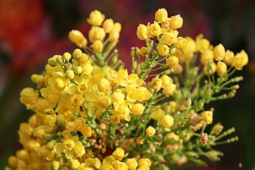 flowers  bud  mahogany