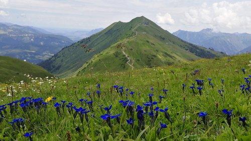flowers  austria  mountains