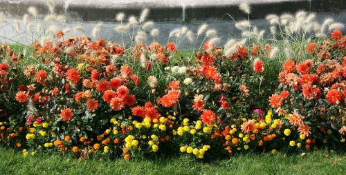 flowers garden flowerbed