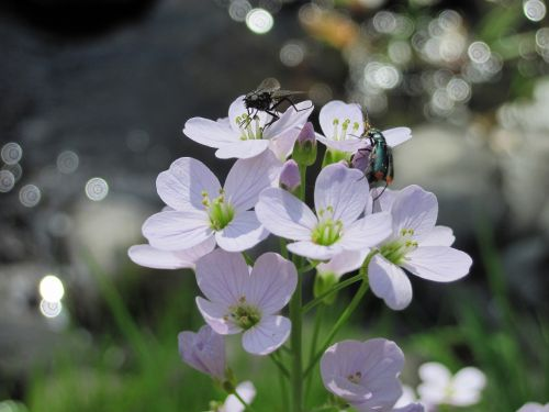 flowers flower insect