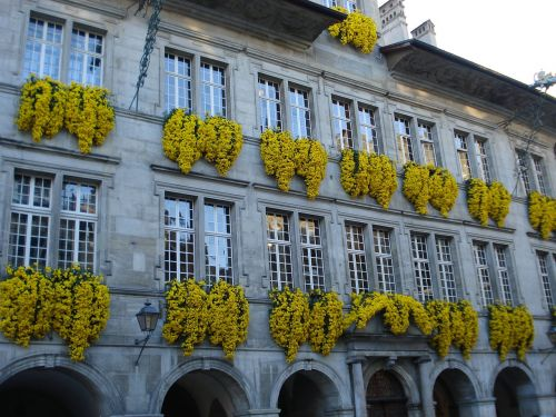 flowers city hall lausanne