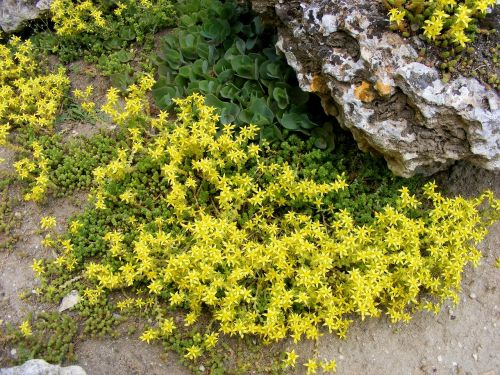 flowers yellow plants