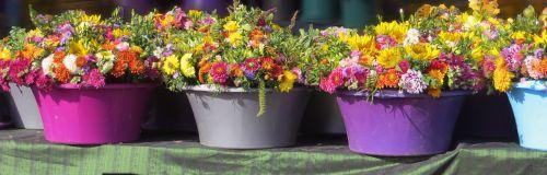 flowers flower pots plant