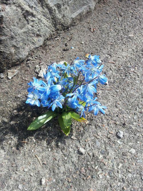 flowers stone asphalt