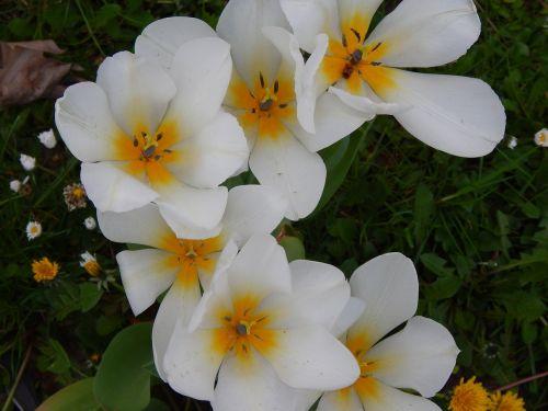 flowers white beautiful