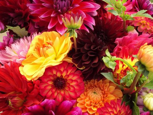 flowers assorted colorful