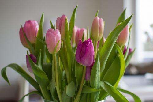 gėlės,tulpės,rožinis,violetinė,pavasaris,gamta,strausas,tulpių puokštė,gėlių vaza,spalvinga,Uždaryti