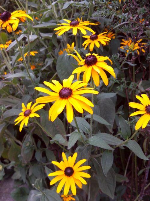 flowers sun hat summer
