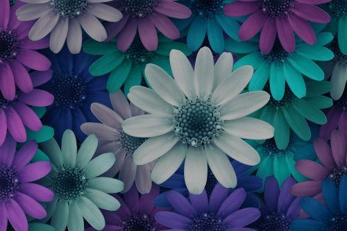 flowers cheerful blossom