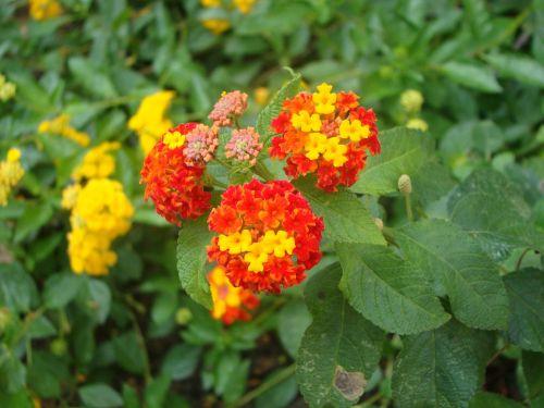 gėlės,krūmas,pavasaris,daržovių,gamta,gėlė,sodas,krūmų gėlės,grožis