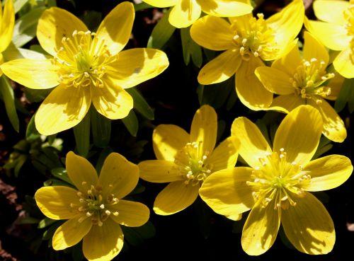 flowers blueen winter linge