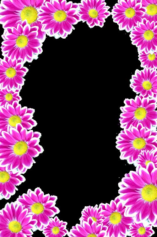 flowers purple isolated