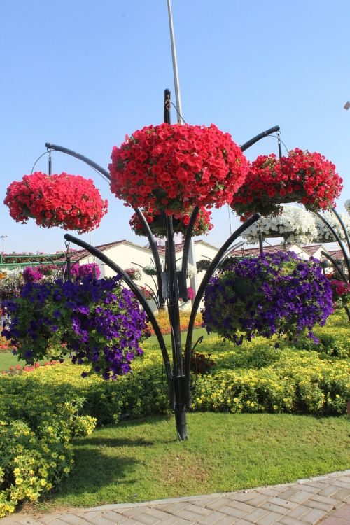 flowers flowerbed garden