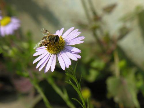 flowers bee their mums