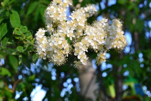 flowers white greens