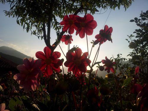 flowers backlight sunset