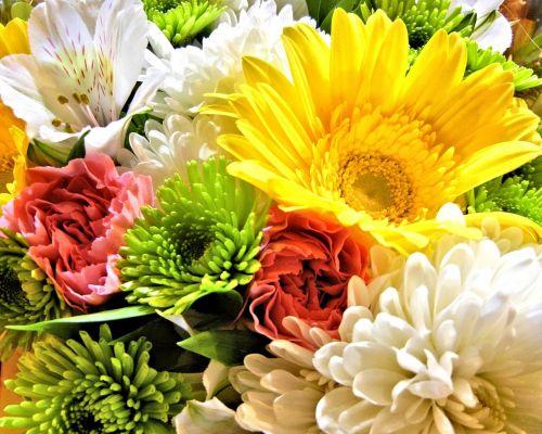 flowers spider mums carnation
