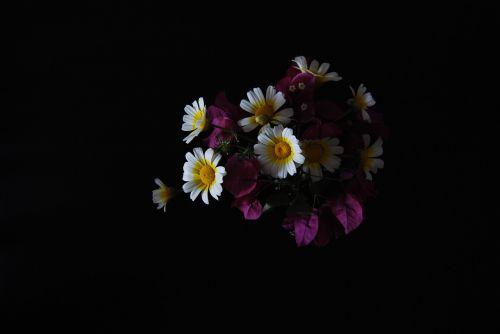 flowers still life dark background