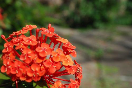 flowers flower wild flower