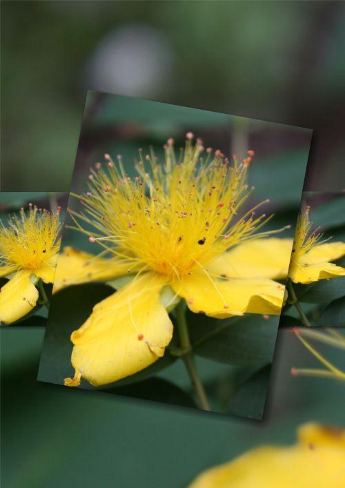 flowers flora photo