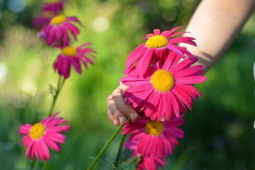 flowers plant a garden pluck