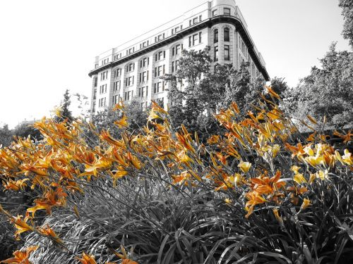 flowers lily building