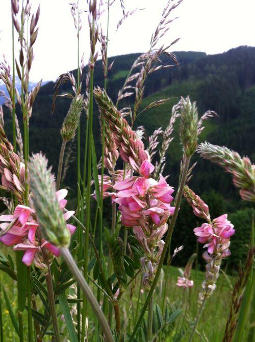 flowers flower meadow grasses