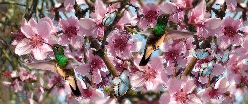 flowers birds beija flor
