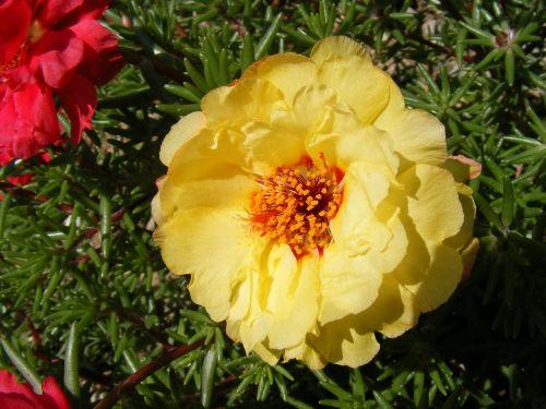 flowers grandiflora moss
