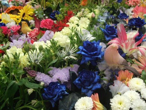 flowers flower garden flower arrangements