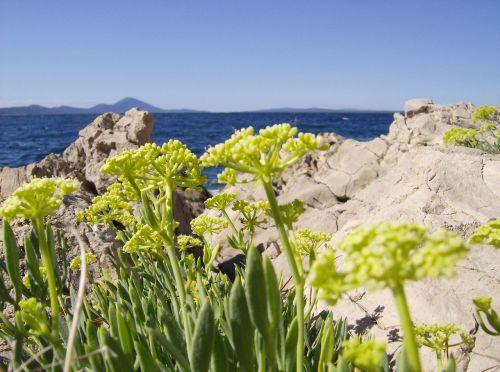 flowers sea adriatic sea