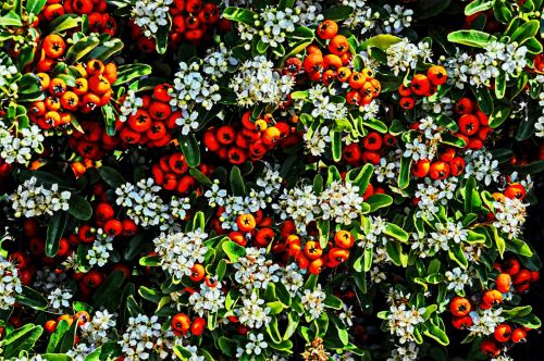 Flowers And Berries Background
