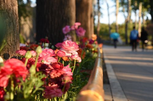 flowers and plants the old summer palace beijing