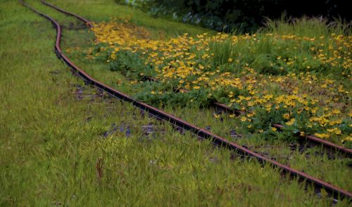 Flowers And Railroad Tracks