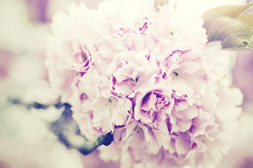 flowers bouquet lilac bouquet of flowers