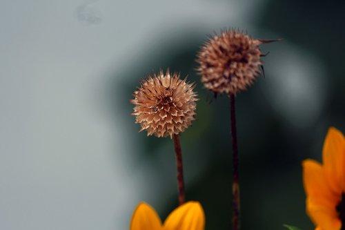 flowers dead  lowers  yellow
