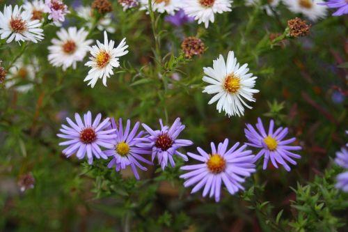 flowers field flower bed greens