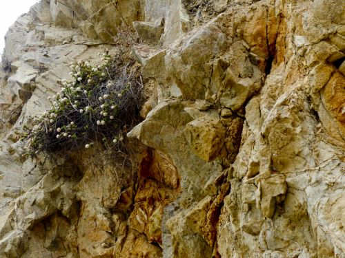 Flowers Growing From Rock