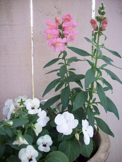 Flowers Growing In Pot