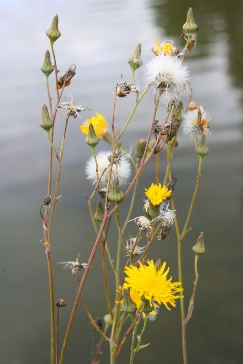 flowers of the field summer flowers