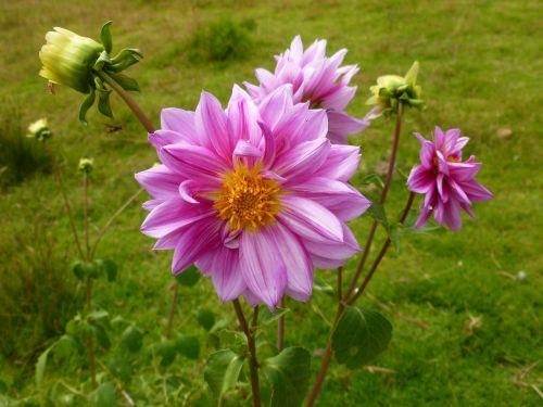 flowers of the finca bella vista guasca cundinamarca