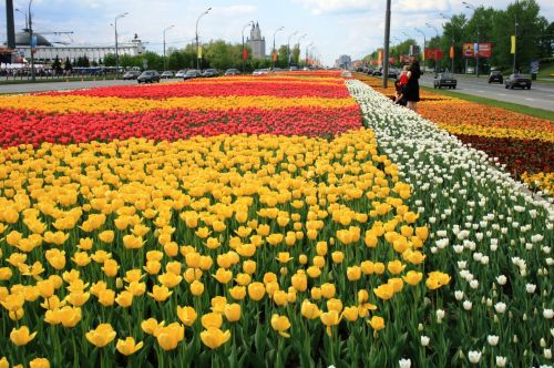 Flowers On Victory Square, Moscow