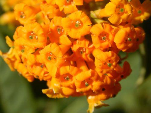 flowers oranges wild unusual